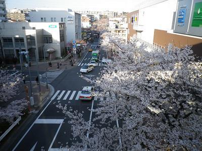 桜右横.jpg
